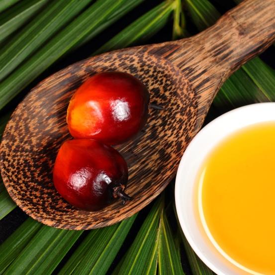 Propalma Palma Aceitera Plantación